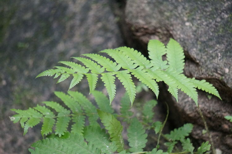 Leaf High Angle View Close-up Plant Green Color Fern