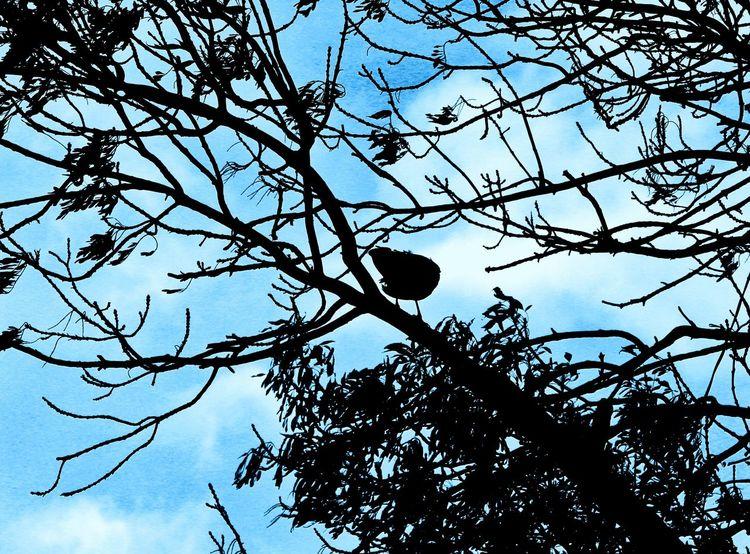 Sky Bird Tree