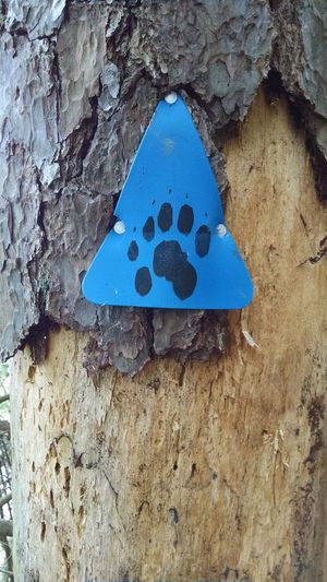 Blue Trunk Eyeem Photography Tree Quiet Place  Beautiful Day Relaxing Information Sign Signage Outdoors Days Journey Close-up Wilderness Bear Path Bear Warning Bear Sign Fromwhereistand Footpath Bear Area
