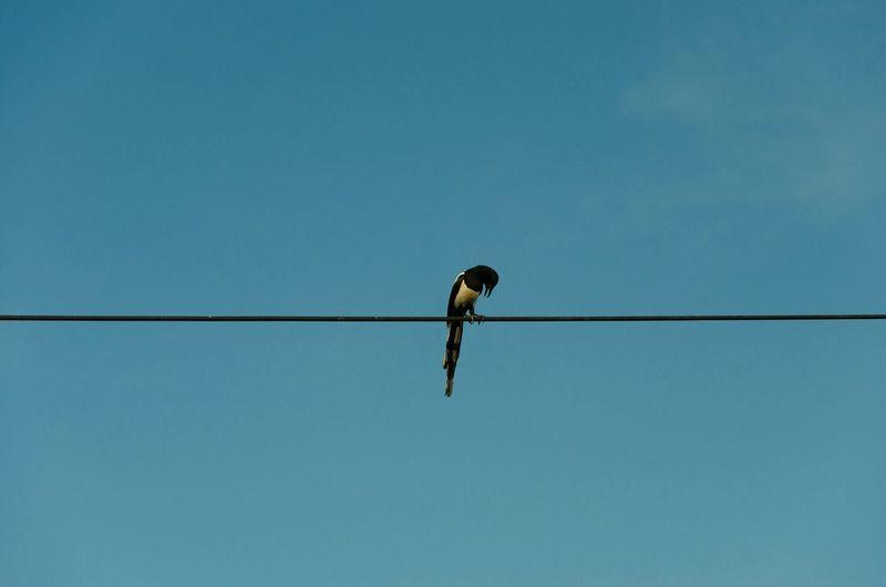 Learn & Shoot: Simplicity Romania Bucharest Bird Minimal High