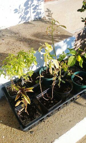 My Plants Outdoors Pepper Green Trishann Artlovelaughter