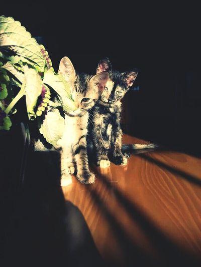 Princesa & Kairi. Kittens Cat Timeago