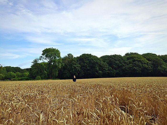 Summer Time  Cornfield Tree Sky Field Land Cloud - Sky Landscape Agriculture Growth Nature Tranquility Real People Environment One Person Beauty In Nature Scenics - Nature Tranquil Scene Rural Scene Farm
