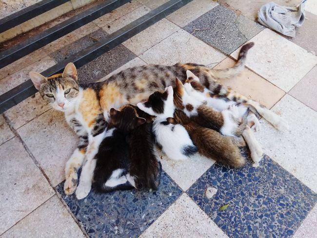 EyeEm Selects Pets Feline Domestic Cat High Angle View