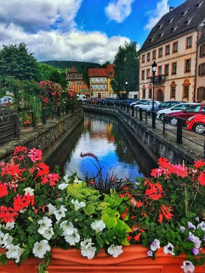 Flower Cloud - Sky Water Architecture Sky Canal Building Exterior Plant Outdoors Built Structure Nature Day No People Tree City France Alsace Architecture Travel Destinations Multi Colored France 🇫🇷