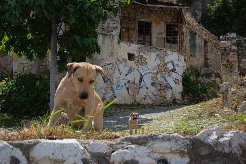 Doggy Love Turkey Animal Animal Themes Architecture Building Building Exterior Built Structure Canine Day Dog Domestic Domestic Animals Mammal Nature New Mother No People One Animal Pets Plant Puppy Rock Silifke Solid Vertebrate