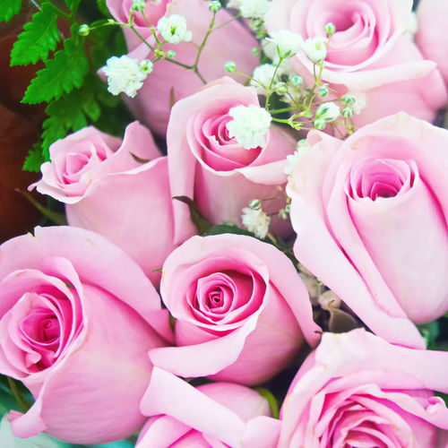 Boquet of Pink