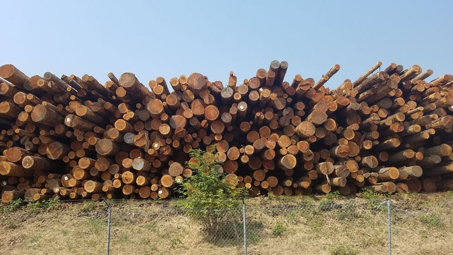 EyeEm Selects Log Lumber Industry Woodpile Deforestation Stack Timber Abundance No People Nature Day Heap Large Group Of Objects Outdoors Clear Sky Tree Sky Farm Factoryfetish Factorylife Factory Zone Metal Industry Chainlink Fence Landscape Beauty In Nature