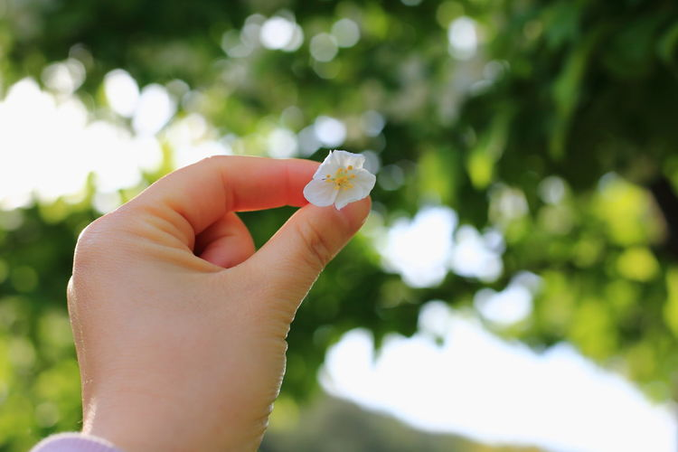 Close-up of hand holding flower against blurred background