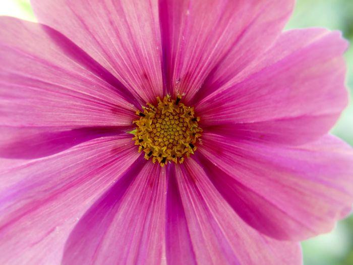 Flower Flowerphotography Flowerporn EyeEmBestPics Eyeembestflower EyeEm Flower Pink Pink Flower Colourful EyeEm Nature Lover