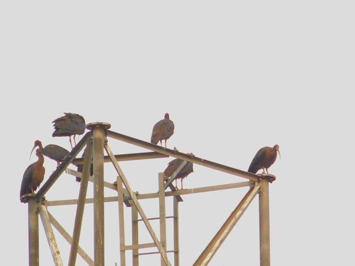 Big Birds Winterflying