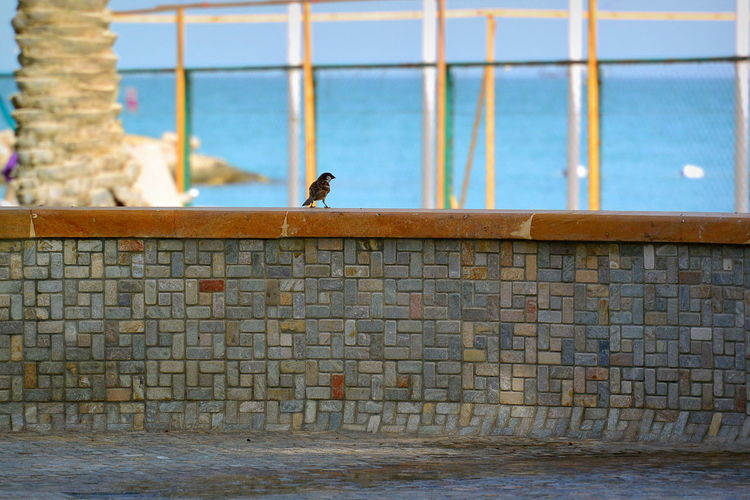 Bird Focus On Foreground Little Bird Observation Perching Sparrow Sparrow Bird