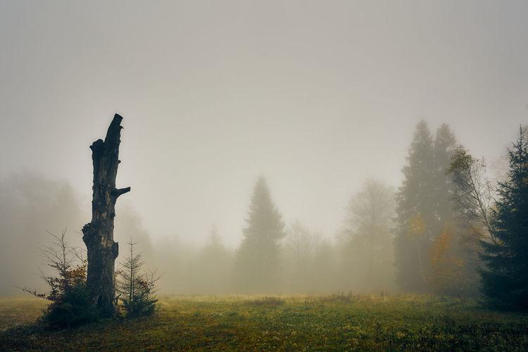 Art Fog Tree