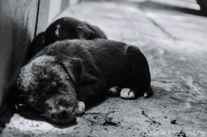 #Puppy #street #blackandwhite #Sleeping #road #cute Animalphoto Dog Lying Down