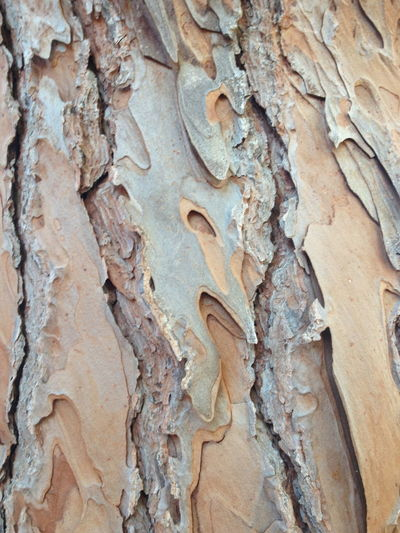 Bark And Light Close-up Face In The Tree Nature Nature Nature Bliss Nature Colours Nature Texture No People Outdoors Texture Textured  Tree Tree Trunk