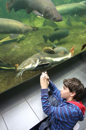Aquarium Berlin Aquarium Animal Themes Animals In Captivity Aquarium Boys Childhood Day Fish High Angle View Indoors  Large Group Of Animals Leisure Activity Lifestyles Nature One Person People Real People Sea Life Standing Water The Fashion Photographer - 2018 EyeEm Awards