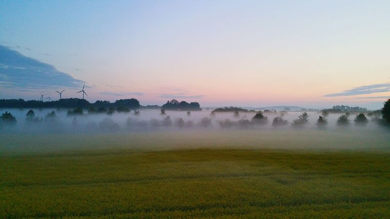 Fog Scenics Rural Scene Landscape Beauty In Nature Nature Springtime Field Tranquil Scene Tree Morning Meadow Atmospheric Mood Agriculture Sunset WoodLand Multi Colored Sunlight No People Environment