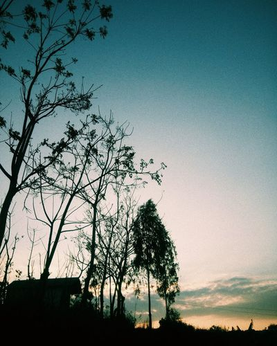 brand tree and blue sky Mobilephotography VSCO Vscocam Vscophoto Vscoasia Vscovietnam Vscovisuals Tree Sky Plant Nature No People Beauty In Nature Outdoors Growth Low Angle View Silhouette Tranquility Sunset Scenics - Nature Tranquil Scene Clear Sky Copy Space Landscape Architecture Dusk Branch
