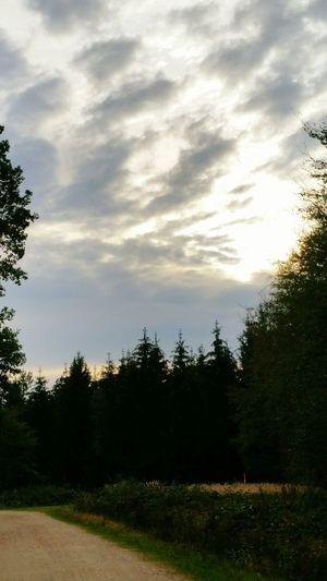 Rümpfe Mülsen In The Forest Forest Landscape_photography EyeEm Nature Lover EyeEm Best Shots - Nature Schöner Ausblick Waldspaziergang Wolkenhimmel