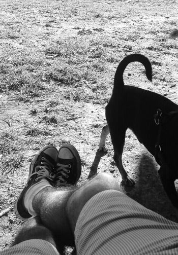 Sunday Sunday Afternoon Dog Love Dog❤ Toirano Avilo Fotoavilo Pinsher