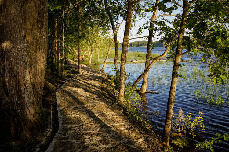 Evening light at the river Calm Finland Holiday Riverside Russia Vacations Beauty In Nature Evening Footpath Forest Land Landscape Nature No People Non-urban Scene Outdoors Riverbank Scenics - Nature Sunset The Way Forward Tranquil Scene Tranquility Tree Water WoodLand
