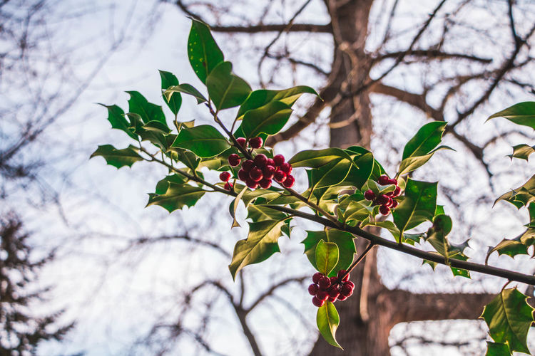 Low angle view of cherry tree