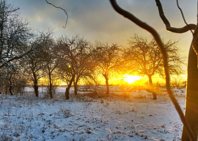 Bare Tree Cold Cold Temperature Landscape Light Outdoors Snow Sunset Tree Weather Winter