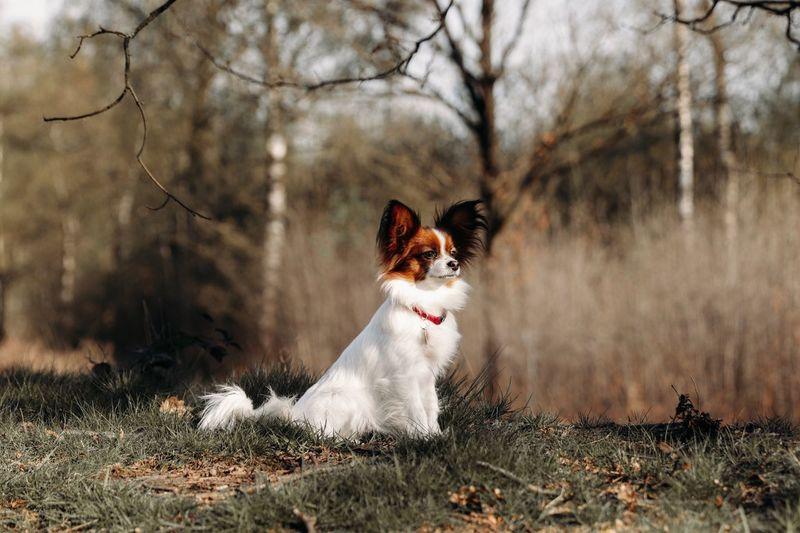 Portrait of a sweet dog on field