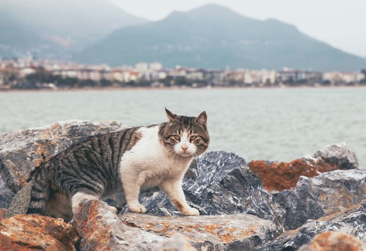 Portrait of cat on rock against mountain