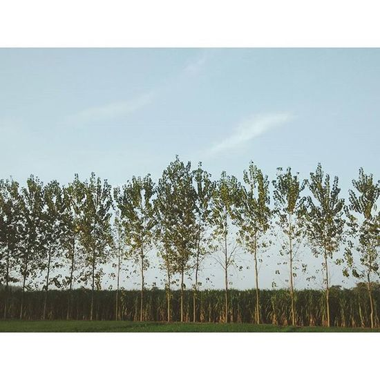 Ajj din chardyaa , tere rang vargaa . 💓 Morningmadnees Googlephotos VSCO Instagram Fade Trees Clouds Sky Nature Photooftheday Likeforlike Photography Wanderer Wanderlust