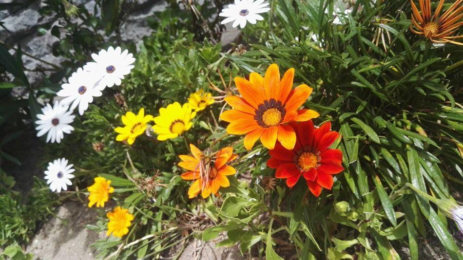 Taking Photos Flowers,Plants & Garden Eyem Best Shots Eye Em Nature Lover Life In Motion Plants And Flowers EyeEm Nature Lover Light Up Your Life Colorfull Art