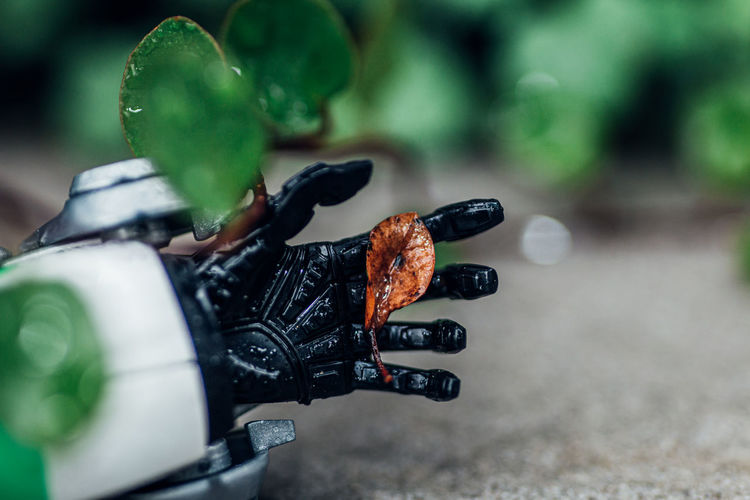 Close-up of dead leaf in the hand of  robot