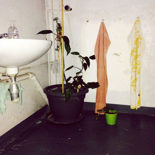 No People Faucet Plant Indoors  Home Interior Day Berlin Photography Cozy Place Week On Eyeem Lifestyles