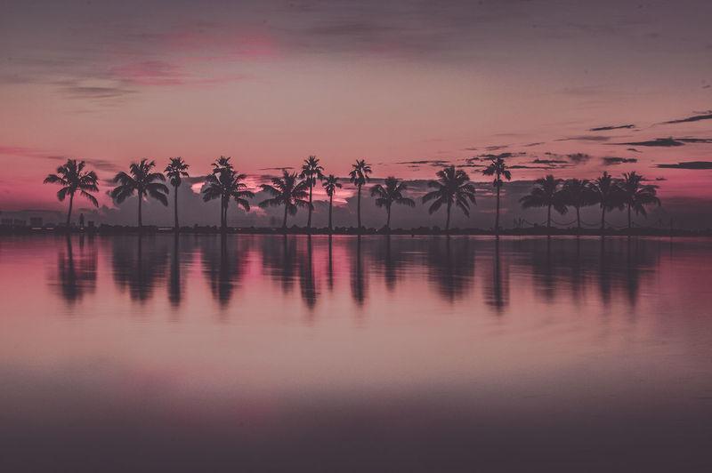 Palm Sunday Matheson Park Miami Miami Beach Palm Trees Palms Reflection Pink Sky Reflection Sunrise Water Water Reflections