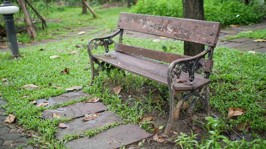 Park Seat Bench Plant Empty Grass Park Park Bench Wood - Material Old Outdoors