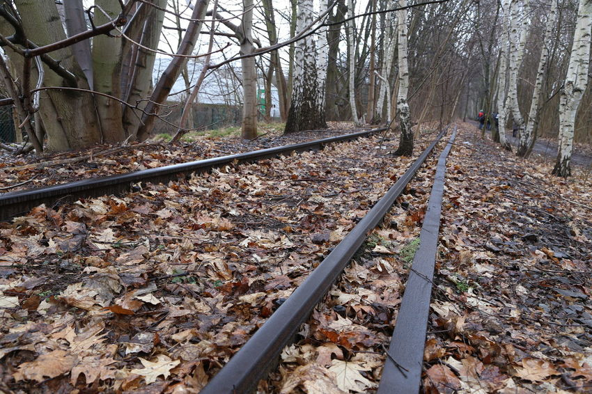 Rail Transportation Track Railroad Track Tree Transportation Autumn Plant Part Forest Leaf Nature Direction Day Land Change The Way Forward Plant No People Metal Mode Of Transportation Outdoors Leaves Parallel Fall