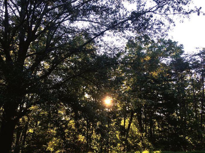 Morning Sun Sunrise Sunrise_Collection