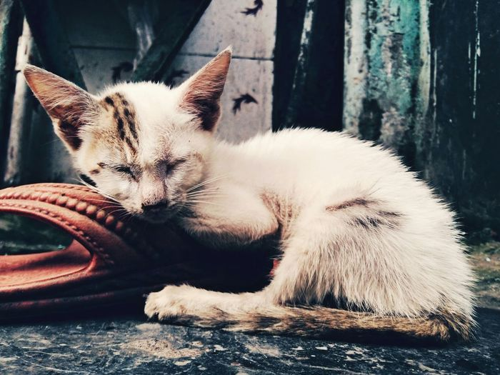 Eyem Best Edits Photooftheday Sleeping Cat Cute Lovely EyeEm Animal Lover Mumbai_india_my_click_mobile_click_enjoy✌ What I Value Mylovelycat