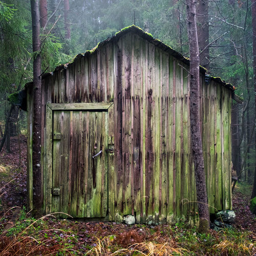 Hiding shed Abandoned Abandoned Places Barn Built Structure Colors Cottage Day Decay Decaying Forest Hiding Hiding Place Moldy Moss Nature No People Old Outdoors Shed Tree Wood - Material Worn Worn Out EyeEmNewHere