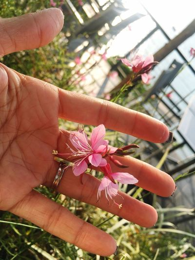 🌸🌸🌸 love you Human Hand Flower Human Body Part Fragility Close-up Focus On Foreground Growth Plant Day Real People Nature Freshness Beauty In Nature One Person Outdoors Flower Head Blossom Flora Florals Flowerporn Flowerlovers Hands Hands On