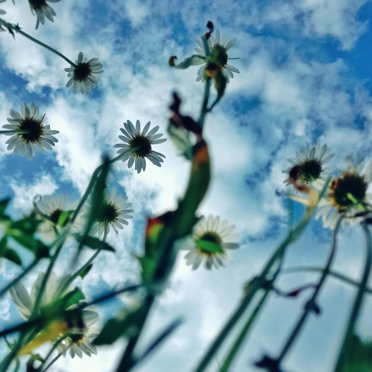 LOW ANGLE VIEW OF WHITE FLOWERING PLANT AGAINST SKY