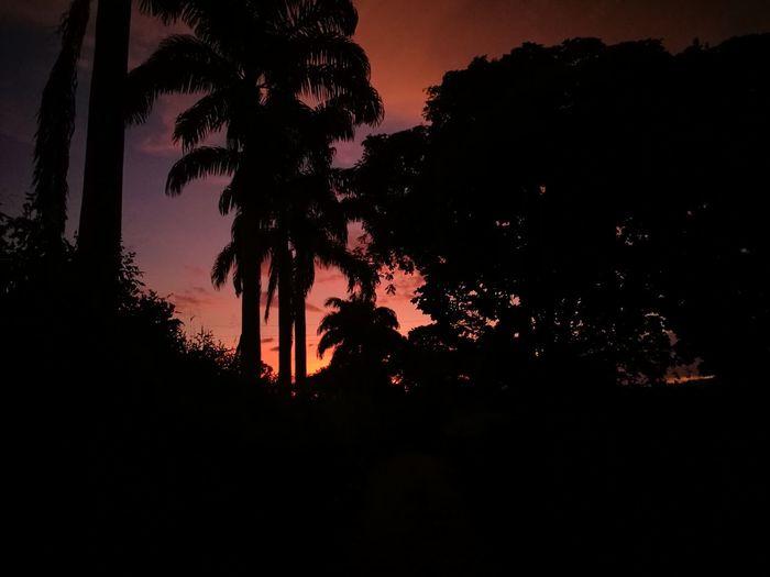 Tree Astronomy Sunset Silhouette Tree Trunk Sky Landscape