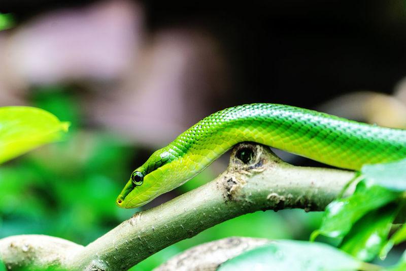 Schlange Animal