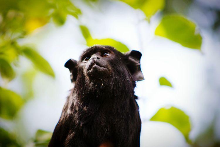 Wo schaut denn der Affe hin?