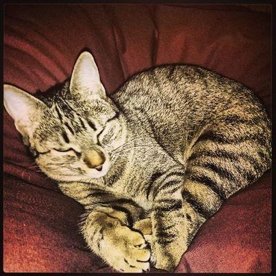 Sleepy!!! Igersitzi Igerscats Igersanimals XperiaZ1 igersmadrid
