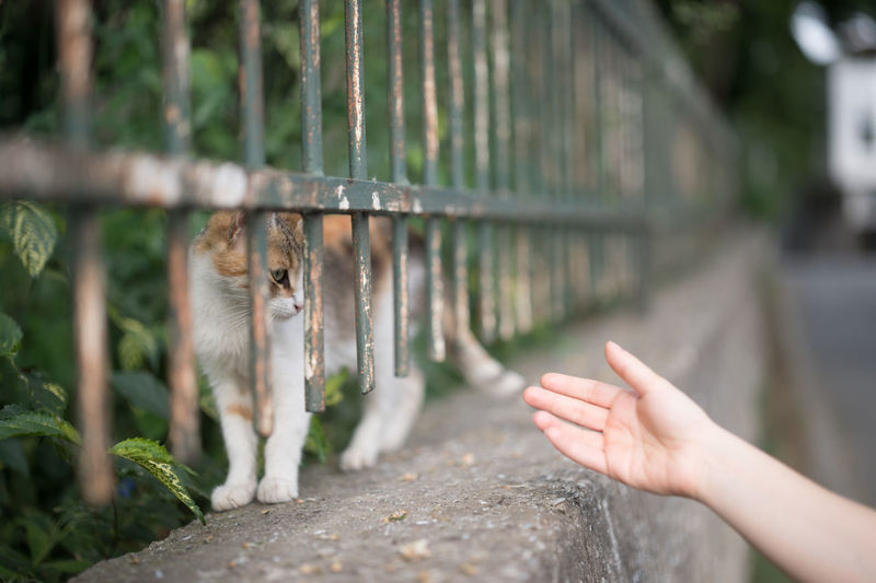 Reach Out. Make the Connection! Animal Connection Animal Themes Bokeh Cat Cats Connected With Nature Connection Domestic Animals Domestic Cat Feline Focus On Foreground Holding Human Body Part Human Hand Mammal Natanomalous One Animal One Person Outdoors Pets Reaching Out Real People Stray Cat Street Live For The Story Place Of Heart Pet Portraits