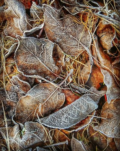 Close-up of dried autumn leaves on land