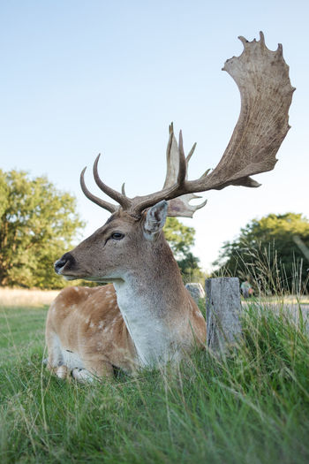 A curious deer - Richmond Park, London 2018 Deer Nature Presence Richmond Park, London Animal Animal Portrait Animal Themes Animal Wildlife Animals Animals In The Wild Antler Approaching Bambi Curiosity Curious Deer England Herbivorous Inquisitive Look Nature Outdoors Plant Stag Wildlife My Best Photo 17.62°