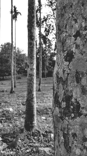 Nature_collection EyeEm Nature Lover Blackandwhite Photography Photography Naturelovers Nature_collection Nature Photography Motog