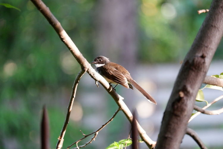 Bird นก EyeEm Selects Tree Branch  Black Color Black And White Lovely Animal Pets Pets And Animals Fly Trees And Nature Tree Birds_collection Birds World Tree Bird Bird Of Prey Perching Tree Branch Owl Animal Themes Close-up Tropical Bird